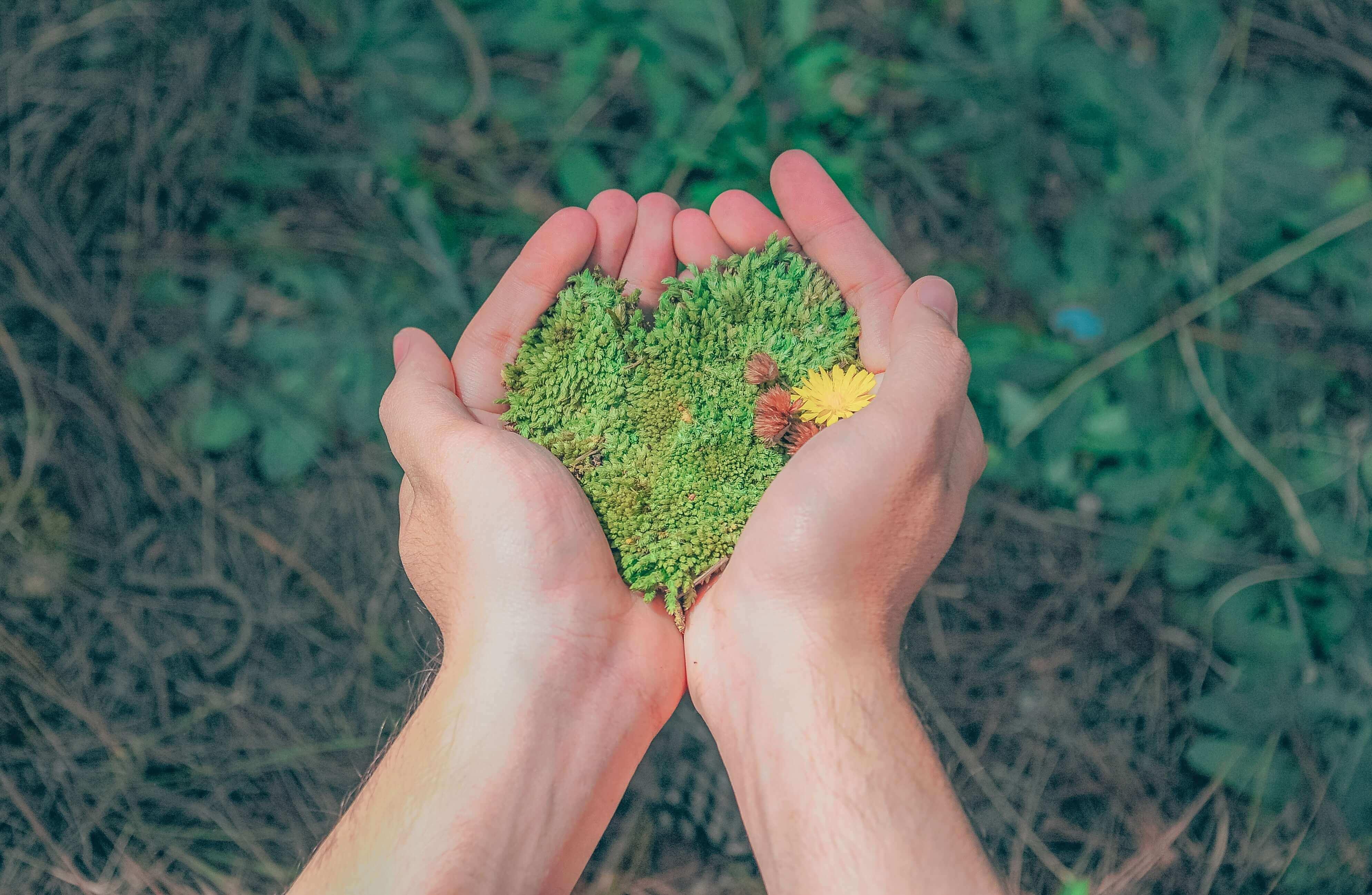 Practicar la ecología para cuidar del medioambiente
